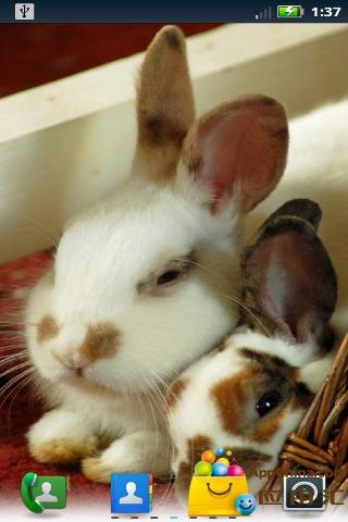 可爱的兔子动态壁纸